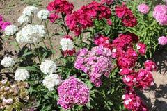Flores agradables de la primavera Foto de archivo libre de regalías