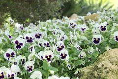 Flores agradables de la primavera Imagen de archivo