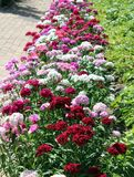 Flores agradables de la primavera Imágenes de archivo libres de regalías
