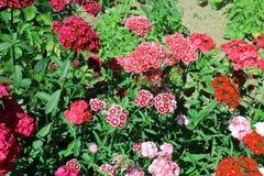 Flores agradables de la primavera Fotografía de archivo libre de regalías