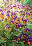 Flores agradables de la primavera Imagen de archivo libre de regalías