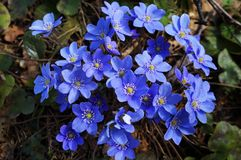 Flores agradables de la primavera foto de archivo