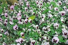 Flores agradables del srpig Imagen de archivo