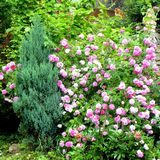 Flores agradables en el jardín en pleno verano, en un día soleado Foto de archivo libre de regalías