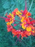 Flores agradables verdes Fotos de archivo libres de regalías