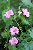 Flores agradáveis no jardim Fotografia de Stock Royalty Free