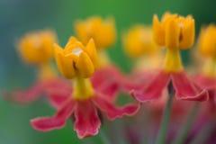 Flores agrupadas macro Fotos de Stock Royalty Free