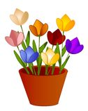 Flores aisladas de los tulipanes en crisol Imagen de archivo libre de regalías