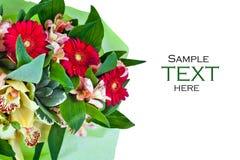 Flores aisladas en el fondo blanco fotografía de archivo libre de regalías