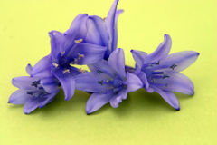 Flores aisladas en verde Foto de archivo libre de regalías