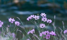 Flores além do rio fotografia de stock