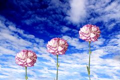 Flores al cielo Foto de archivo libre de regalías