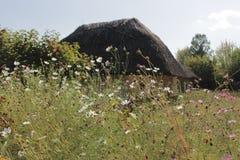 Flores al lado de la casa del pueblo en Ucrania imagen de archivo