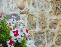 Flores al lado de la pared de piedra Fotos de archivo libres de regalías