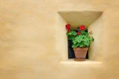 Flores al lado de una pared amarilla Fotografía de archivo