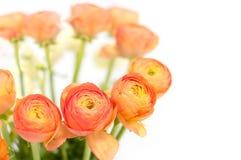 Flores alaranjadas bonitas Foto de Stock Royalty Free