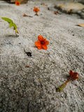 Flores alaranjadas bonitas na terra Fotos de Stock Royalty Free