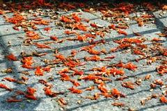 Flores alaranjadas da queda na terra apedrejada do pavimento Foto de Stock Royalty Free