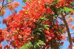 Flores alaranjadas do close-up contra o céu azul Fotos de Stock