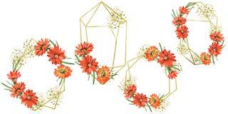Flores alaranjadas do gazania da aquarela Flor botânica floral Quadrado do ornamento da beira do quadro imagem de stock