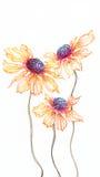 Flores alaranjadas do helenium da aquarela no fundo branco Foto de Stock