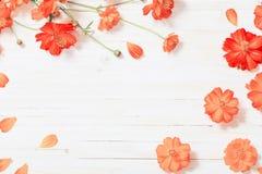 Flores alaranjadas do verão no fundo de madeira branco Imagem de Stock Royalty Free