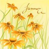 Flores alaranjadas e amarelas com elementos florais das folhas verdes ilustração stock