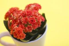 Flores alaranjadas em um copo do chá imagens de stock royalty free