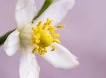 Flores alaranjadas no ramo Imagem de Stock