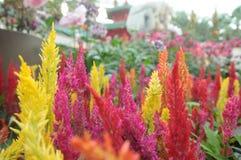Flores aleatórias Fotografia de Stock
