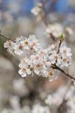 Flores alegres del flor el día de primavera foto de archivo libre de regalías