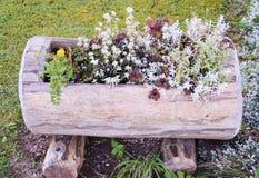 Flores alpinas coloridas Foto de archivo libre de regalías