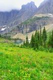 Flores alpinas salvajes en el paisaje del Parque Nacional Glacier Foto de archivo libre de regalías