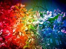Flores alteradas del arco iris de la realidad Imagen de archivo libre de regalías
