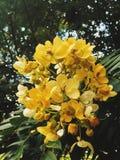 Flores amarelas fotos de stock