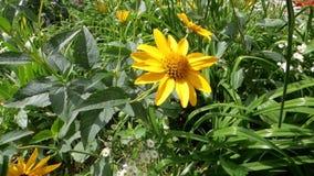 Flores amarelas video estoque