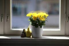 Flores amarelas agradáveis na janela fotos de stock royalty free