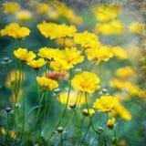 Flores amarelas bonitas Imagens de Stock