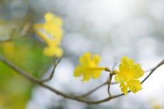 Flores amarelas bonitas imagem de stock