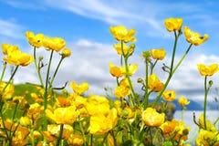 Flores amarelas bonitas em Arnarstapi fotos de stock royalty free