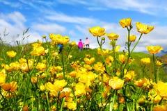 Flores amarelas bonitas em Arnarstapi imagem de stock