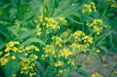 Flores amarelas bonitas na floresta Fotografia de Stock Royalty Free