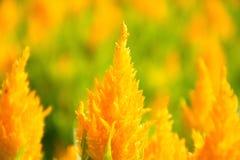 Flores amarelas bonitas no fundo imagem de stock