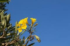 Flores amarelas bonitas no parque imagens de stock
