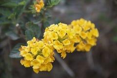 Flores amarelas brilhantes Fotos de Stock Royalty Free