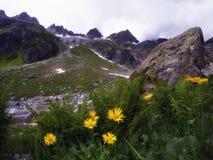 Flores amarelas com as montanhas no fundo Fotos de Stock Royalty Free