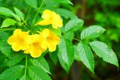 Flores amarelas com fundo verde das folhas foto de stock