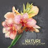Flores amarelas com manchas cor-de-rosa As flores gostam de orquídeas Imagens de Stock Royalty Free