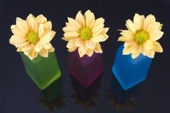 Flores amarelas da margarida Foto de Stock