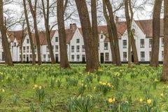 Flores amarelas da mola no parque em Bruges, Bélgica fotos de stock